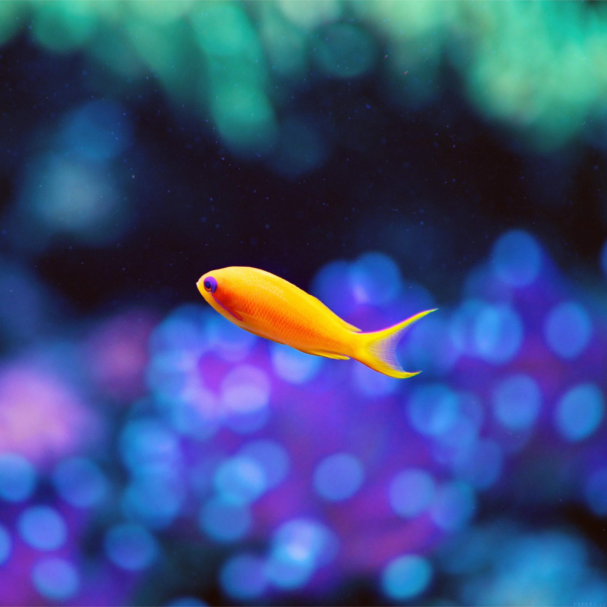 mj49-cute-fish-nemo-ocean-sea-animal-nature-wallpaper