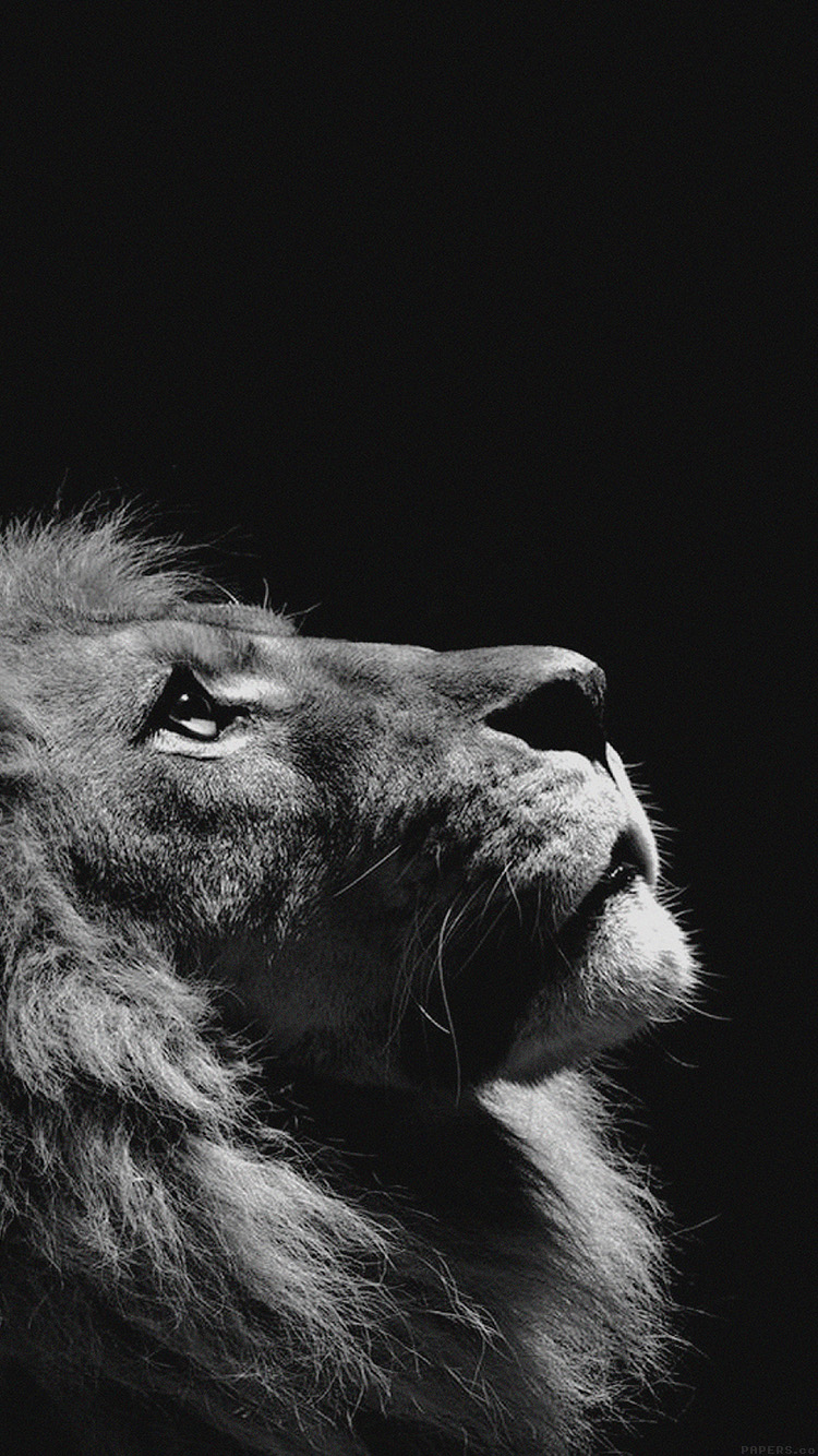 iPhone7papers.com-Apple-iPhone7-iphone7plus-wallpaper-mj50-lion-looking-sky-animal-nature-dark-photo