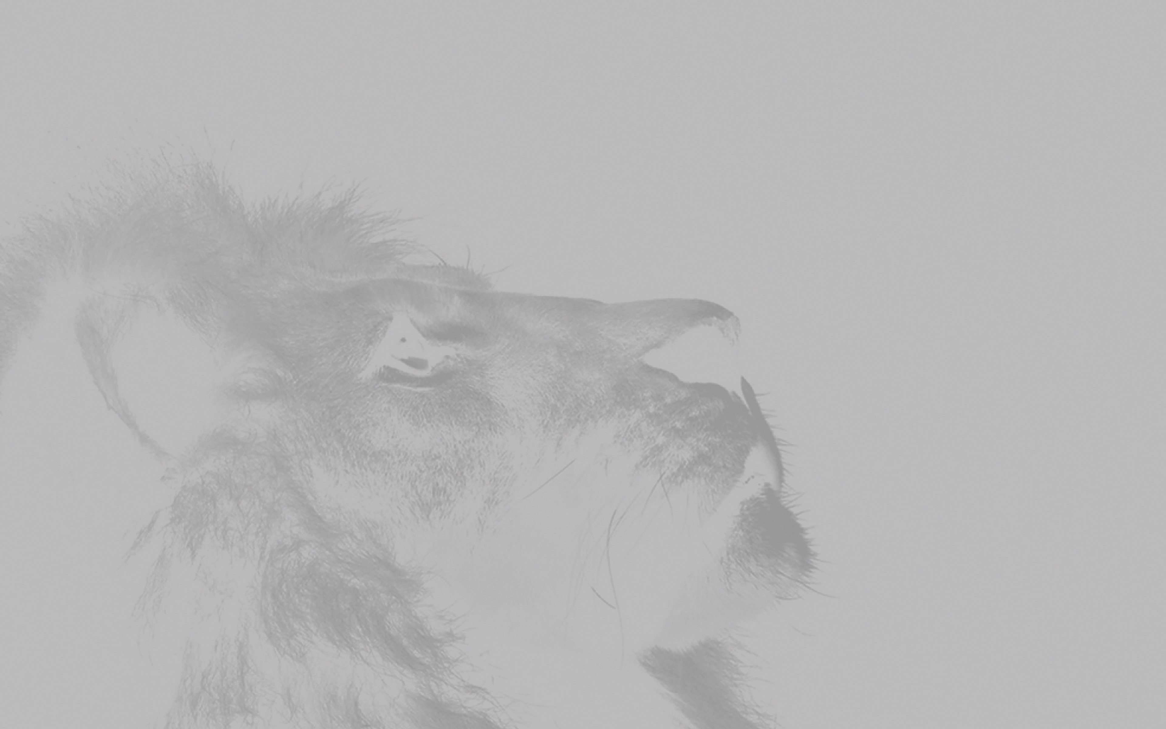 the secret lion essay 26-1-2015 hamlet theme essay  secrets, or lies  the lion king, where the main character, simba, is faced with the death of his father,.