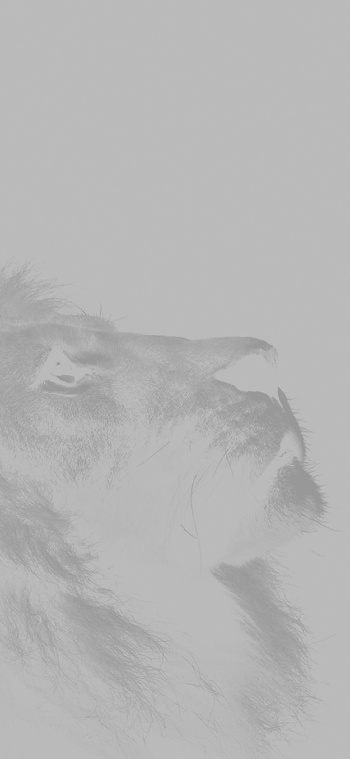 Iphonexpapers Com Iphone X Wallpaper Mj51 Lion Looking