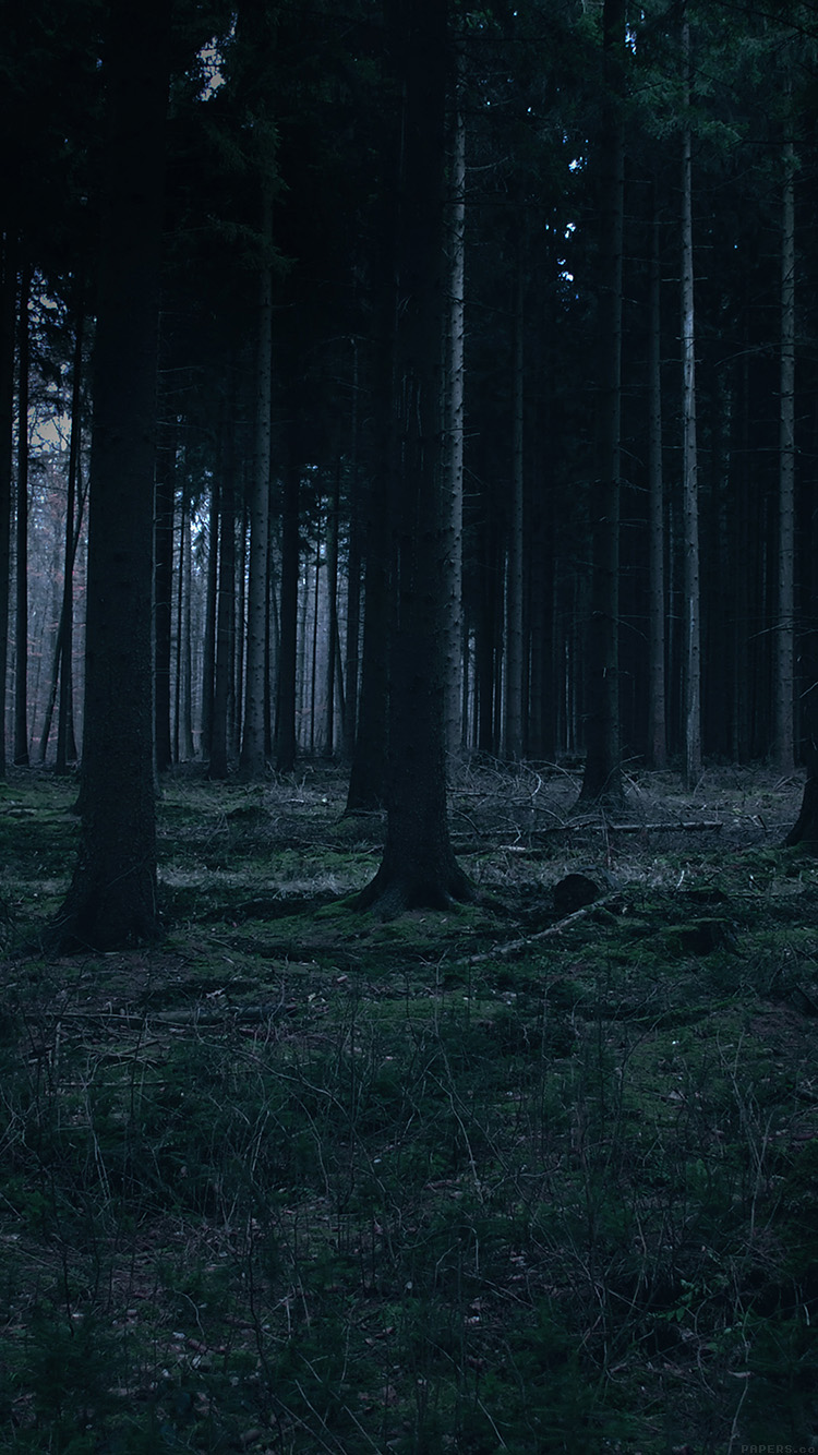 iPhone6papers.co-Apple-iPhone-6-iphone6-plus-wallpaper-mj52-forest-dark-night-trees-nature