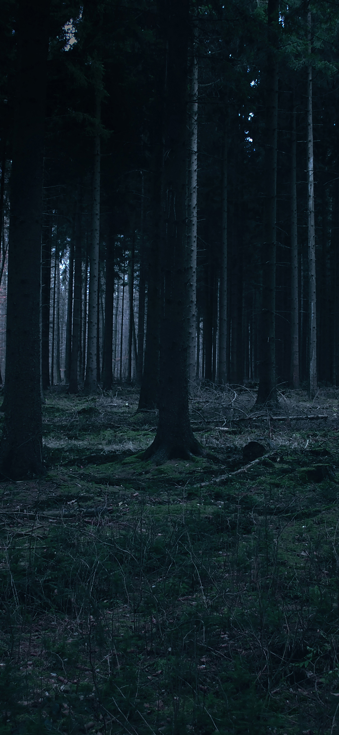 iPhoneXpapers.com-Apple-iPhone-wallpaper-mj52-forest-dark-night-trees-nature
