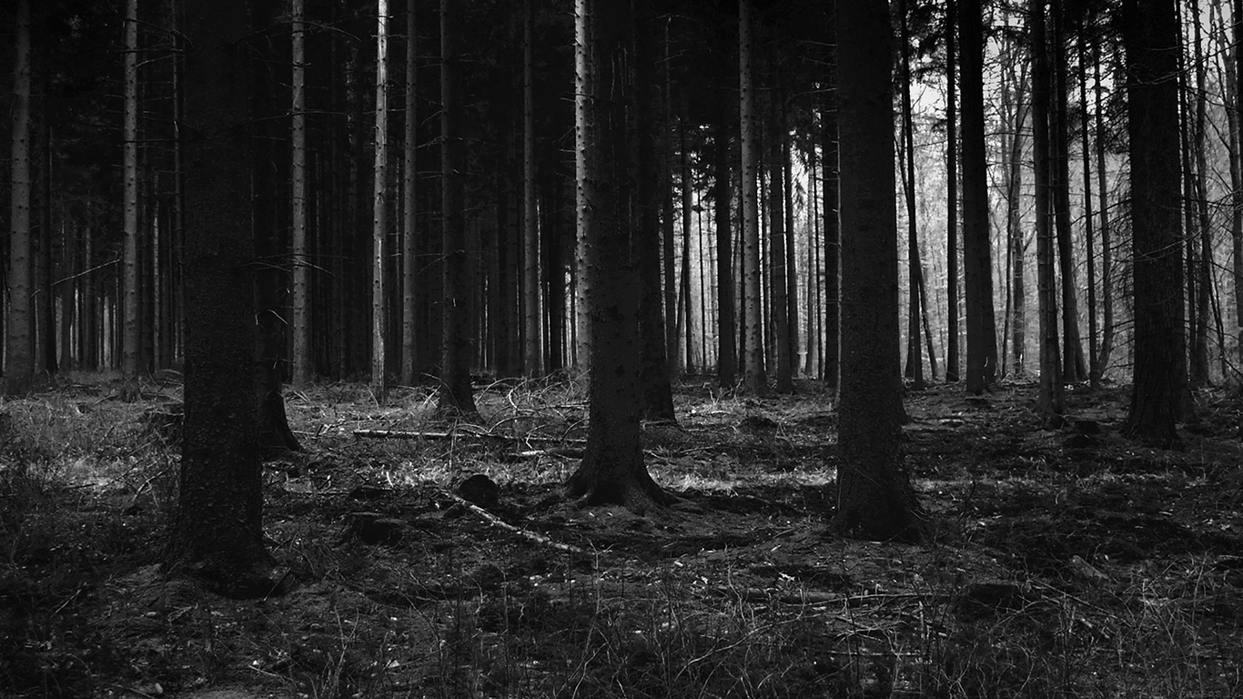 desktop-wallpaper-laptop-mac-macbook-airmj53-forest-dark-scary-night-trees-nature-wallpaper