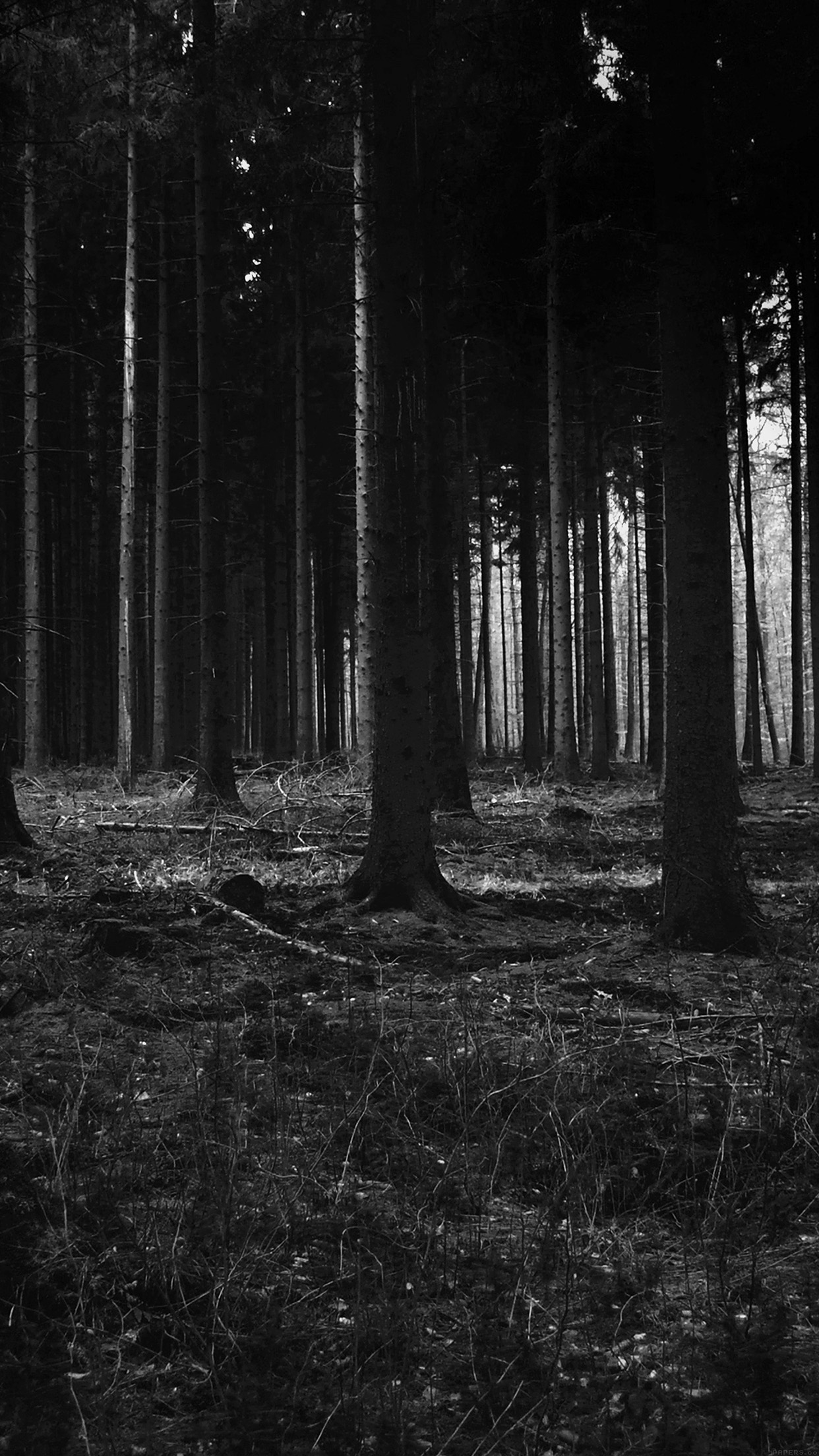mj53-forest-dark-scary-night-trees-nature - Papers.co