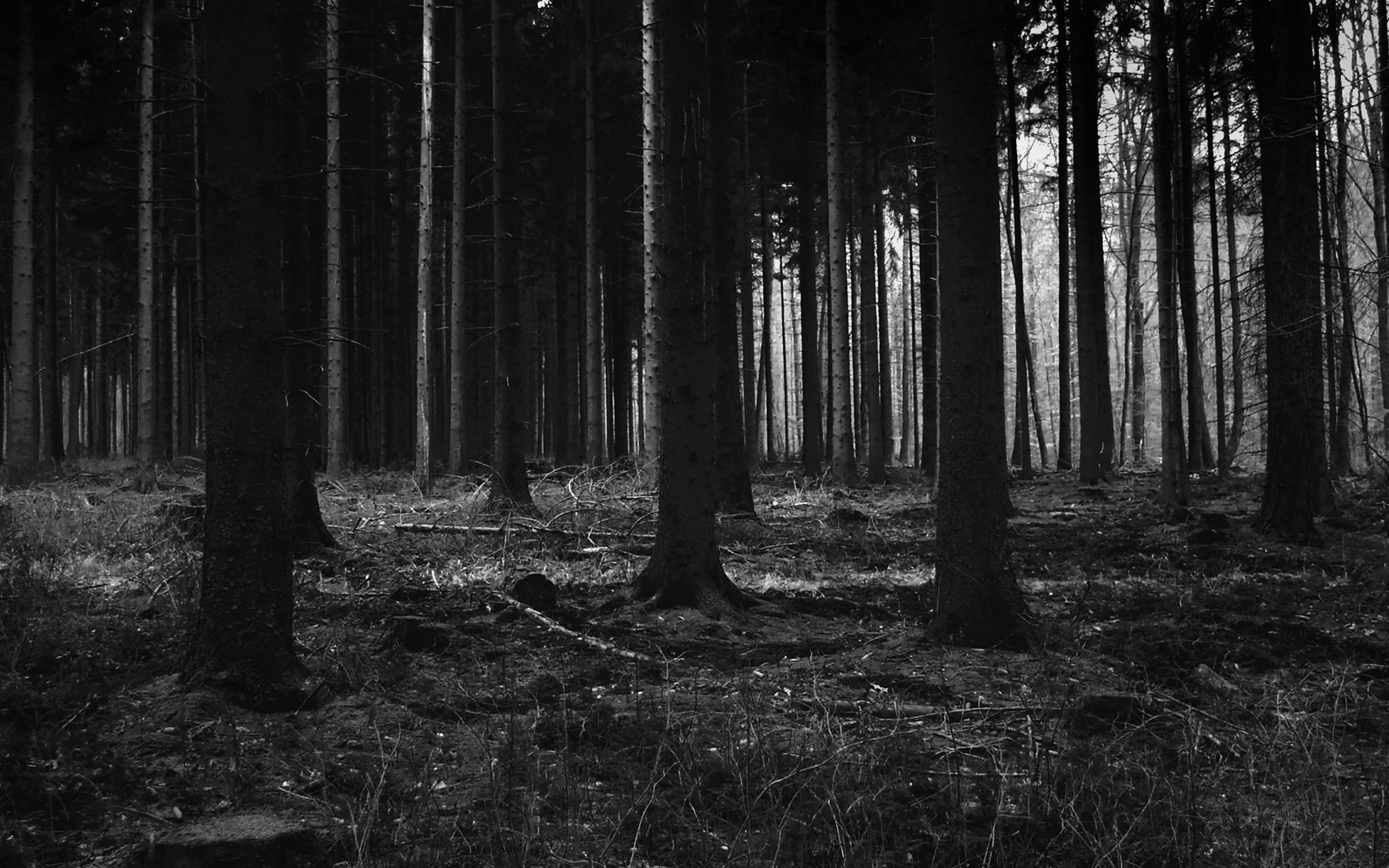 Download Wallpaper Night Forest - papers  Gallery-216658.jpg