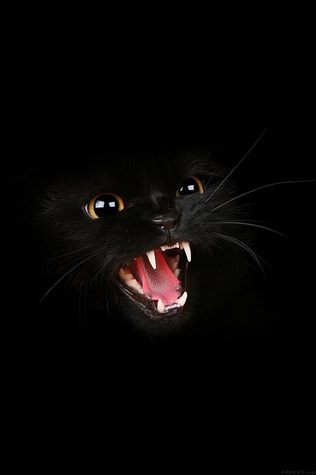 freeios7.com-iphone-4-iphone-5-ios7-wallpapermj54-black-cat-roar-animal-cute-iphone4