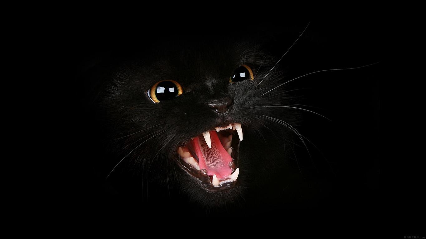 iPapers.co-Apple-iPhone-iPad-Macbook-iMac-wallpaper-mj54-black-cat-roar-animal-cute-wallpaper