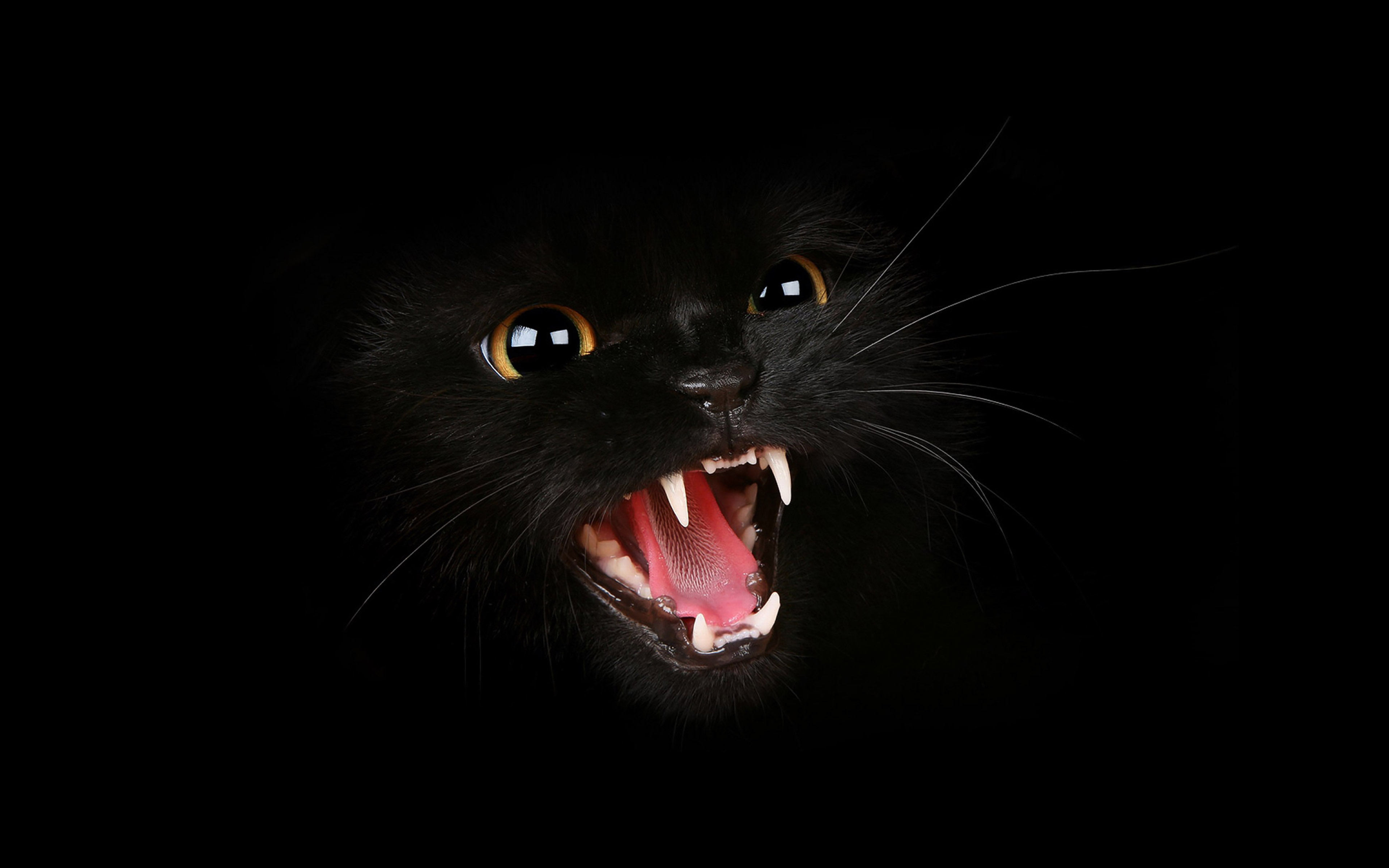 black cat essay The man i married was tender at heart and was particularly fond of animals when he was a child, he was pampered with many different pets, and was at his happiest.