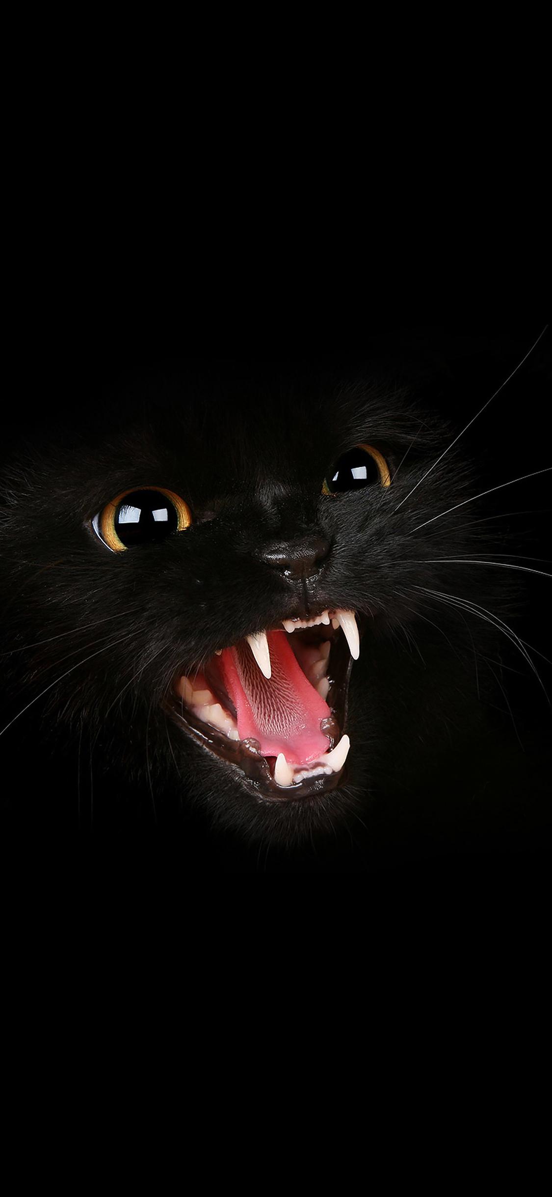 Mj54 Black Cat Roar Animal Cute Papers Co