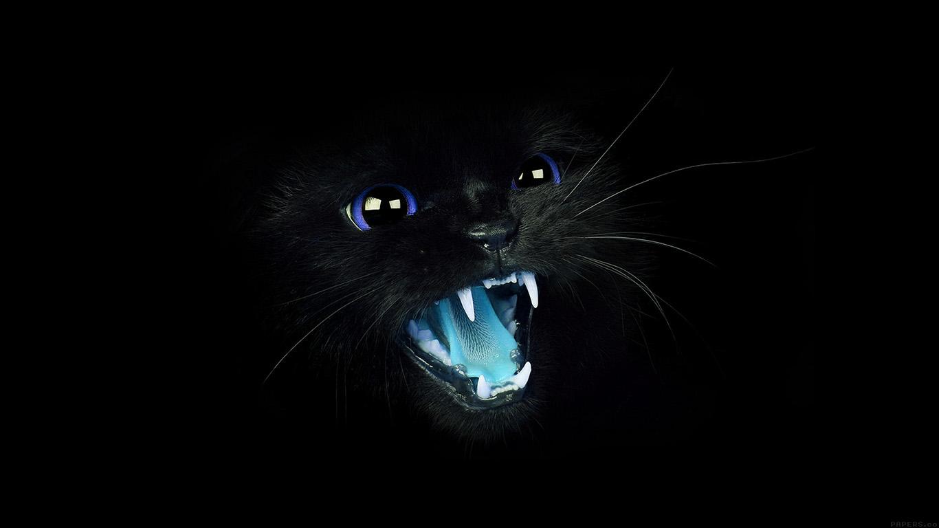 Wallpaper For Desktop Laptop Mj55 Black Cat Blue Eye Roar Animal Cute
