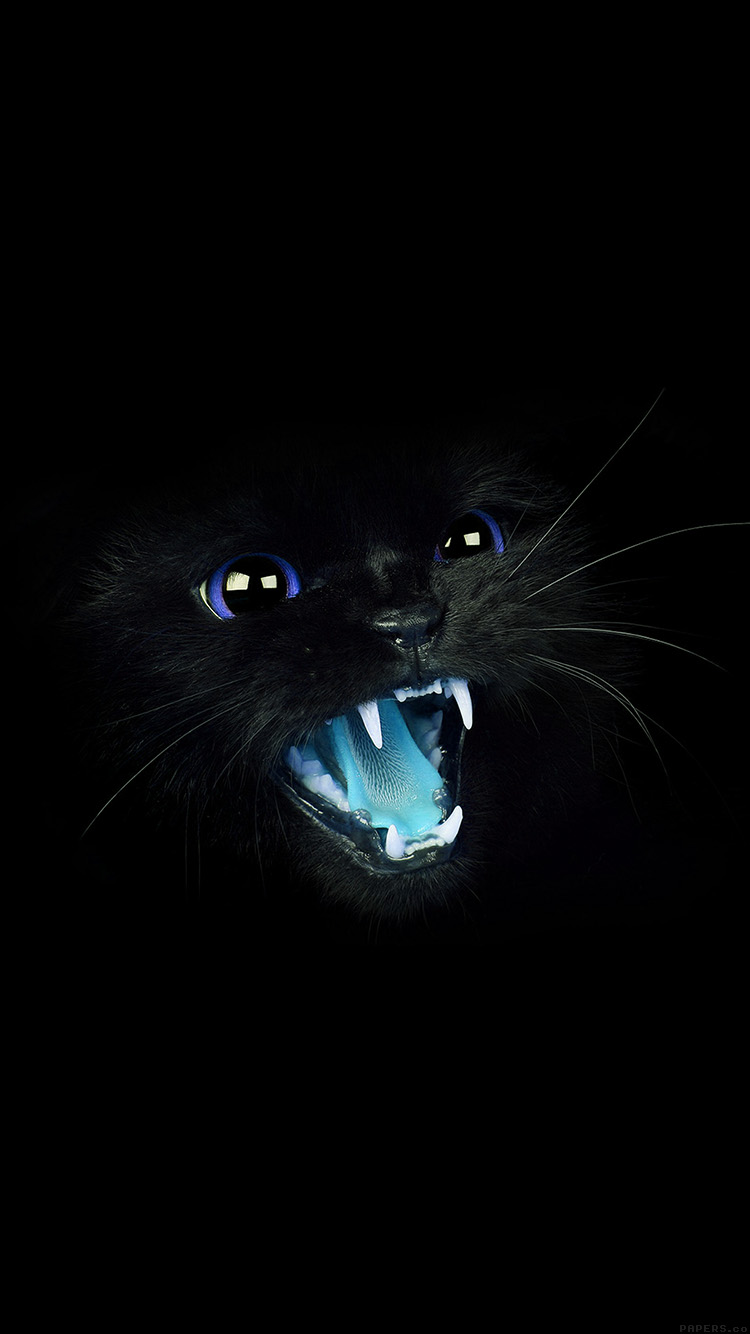Freeios8 Mj55 Black Cat Blue Eye Roar Animal Cute