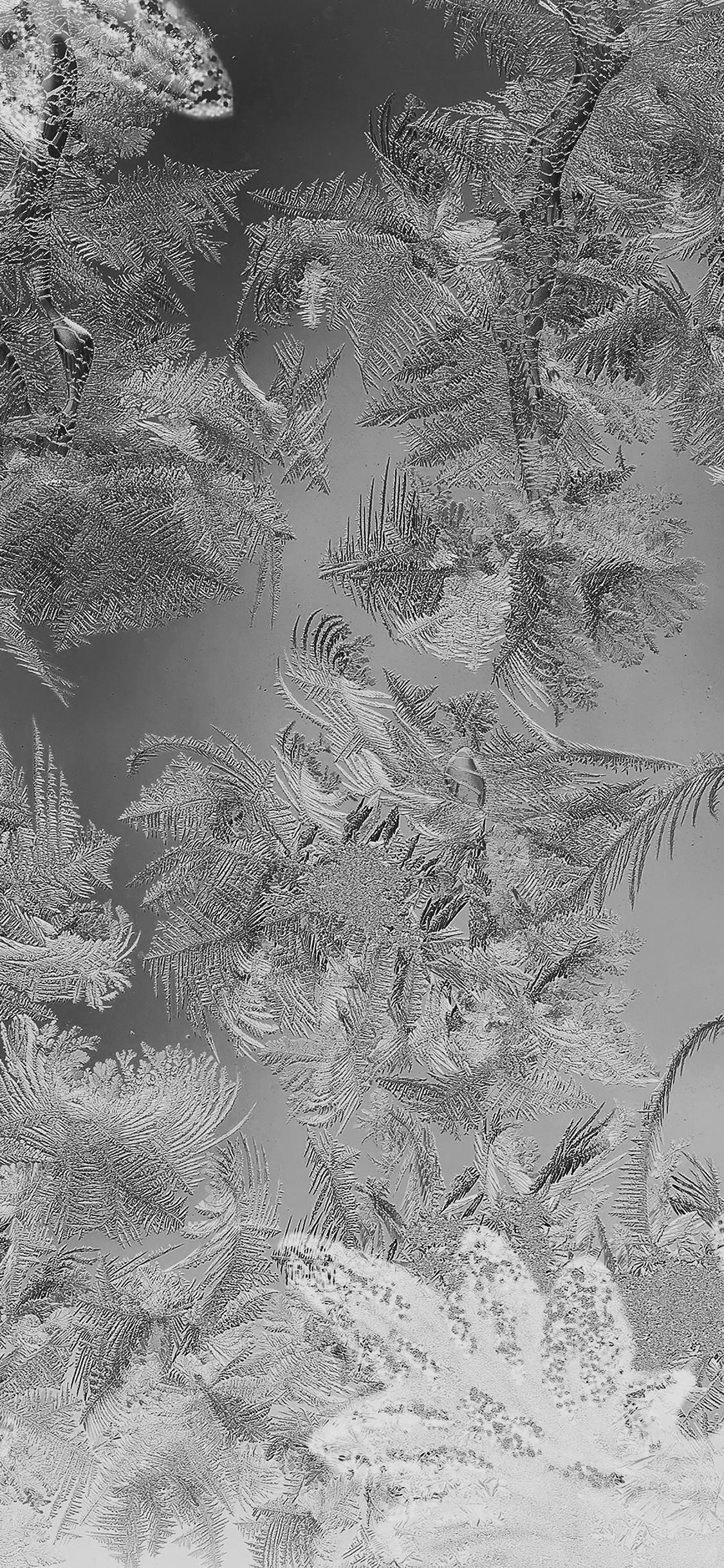 iPhoneXpapers.com-Apple-iPhone-wallpaper-mj61-ice-pattern-black-snow-nauture-christmas