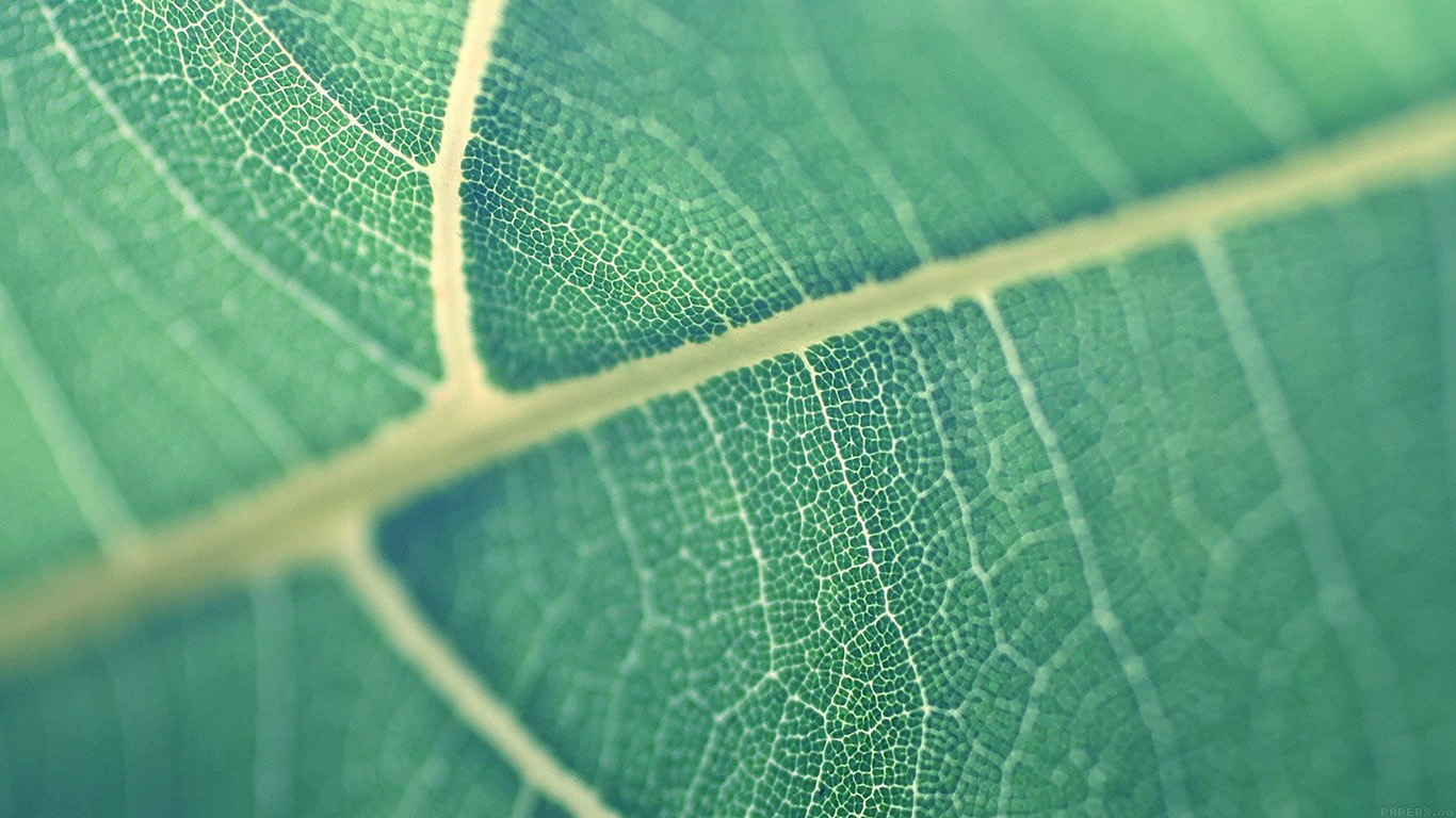 iPapers.co-Apple-iPhone-iPad-Macbook-iMac-wallpaper-mj83-leaf-bokeh-green-nature-wallpaper