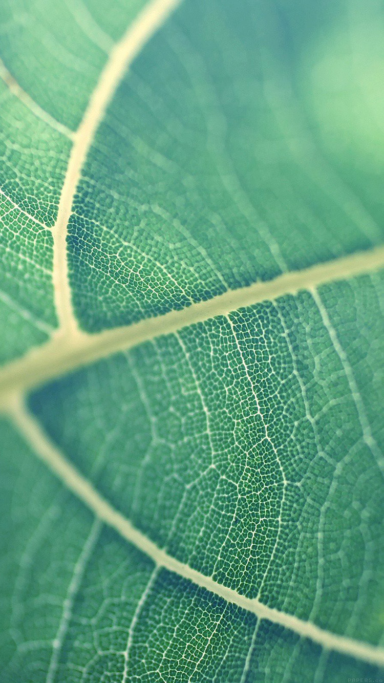 iPhone6papers.co-Apple-iPhone-6-iphone6-plus-wallpaper-mj83-leaf-bokeh-green-nature