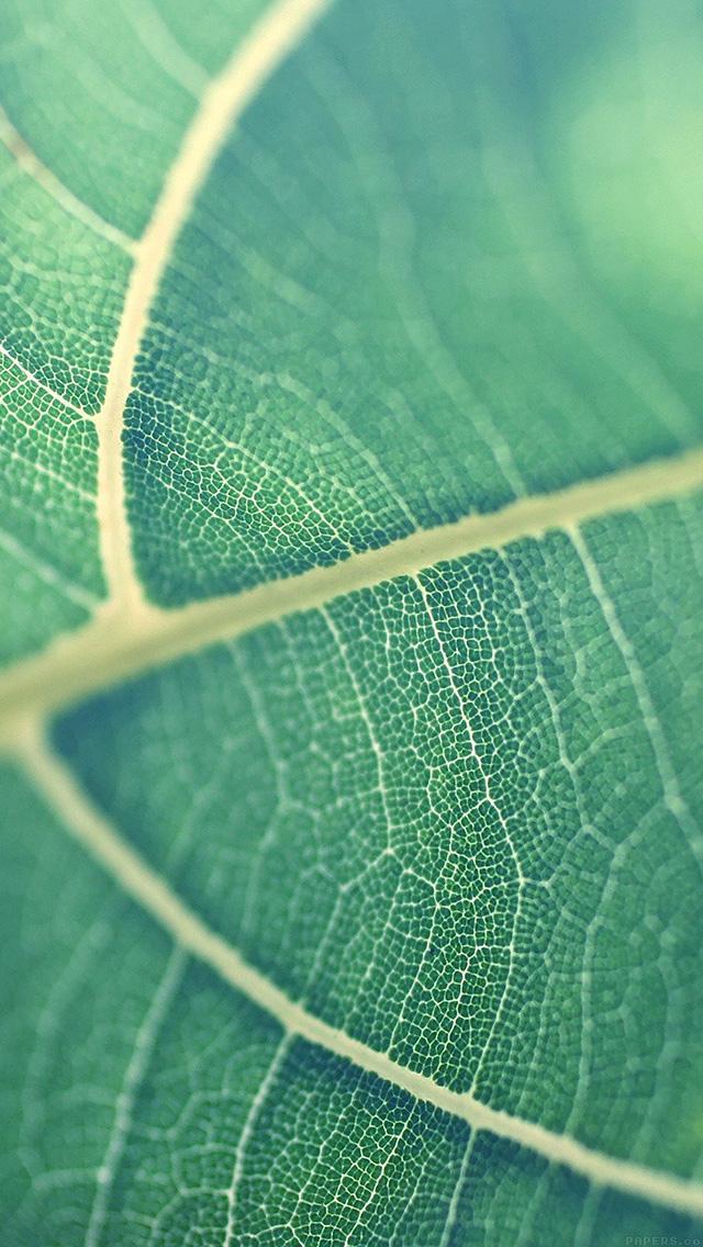 Mj83 Leaf Bokeh Green Nature