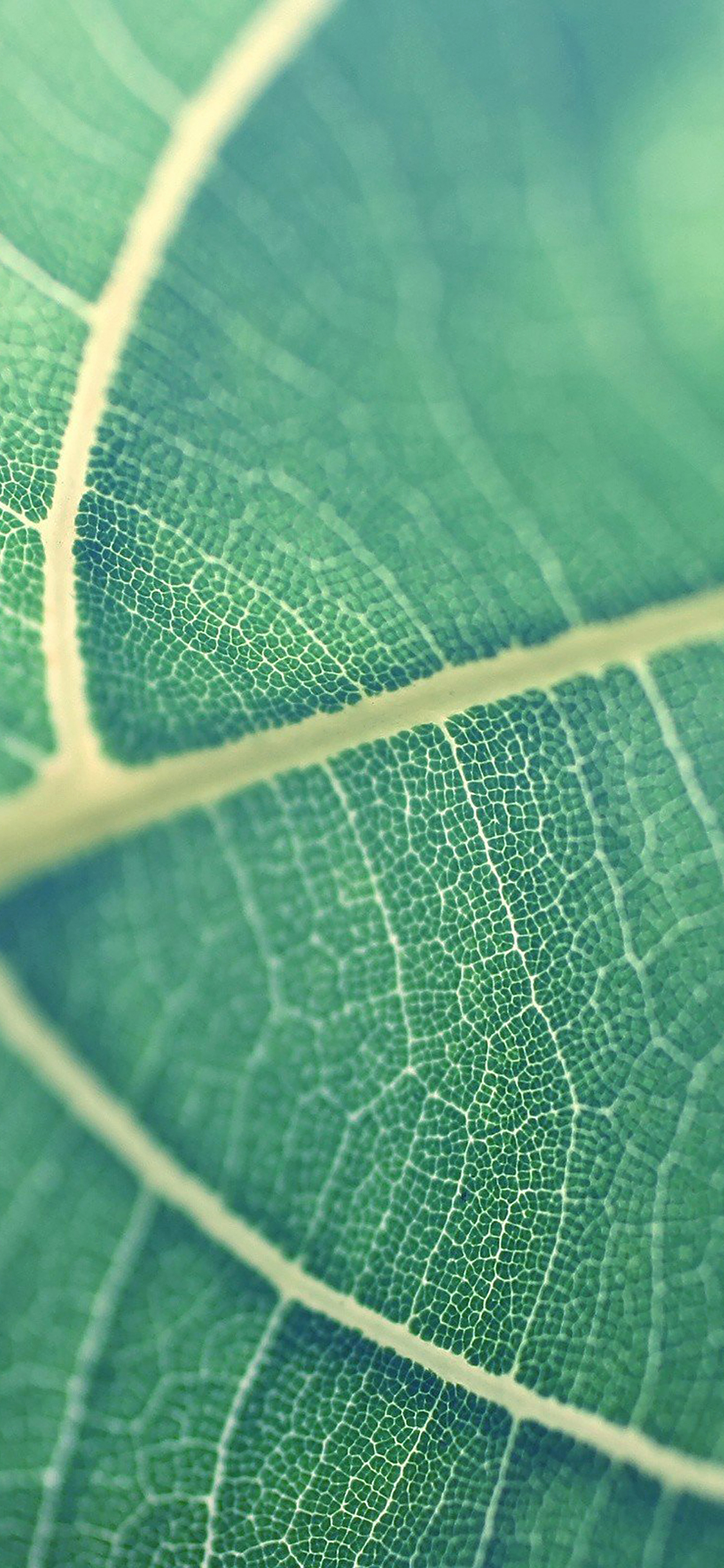 iPhoneXpapers.com-Apple-iPhone-wallpaper-mj83-leaf-bokeh-green-nature