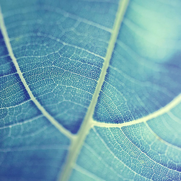 iPapers.co-Apple-iPhone-iPad-Macbook-iMac-wallpaper-mj84-leaf-bokeh-blue-nature-wallpaper