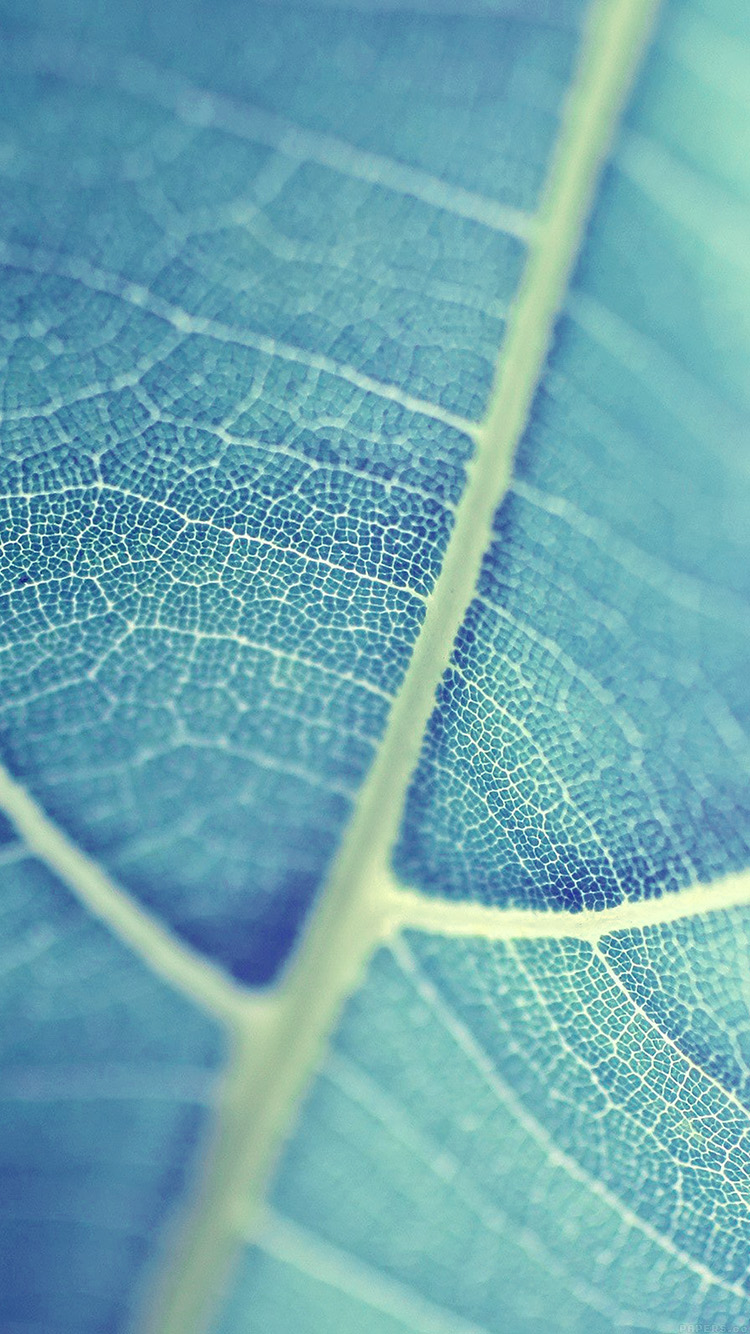 iPhonepapers.com-Apple-iPhone8-wallpaper-mj84-leaf-bokeh-blue-nature