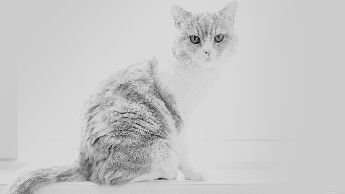 iPapers.co-Apple-iPhone-iPad-Macbook-iMac-wallpaper-mj86-cute-cat-white-animal-nature-wallpaper