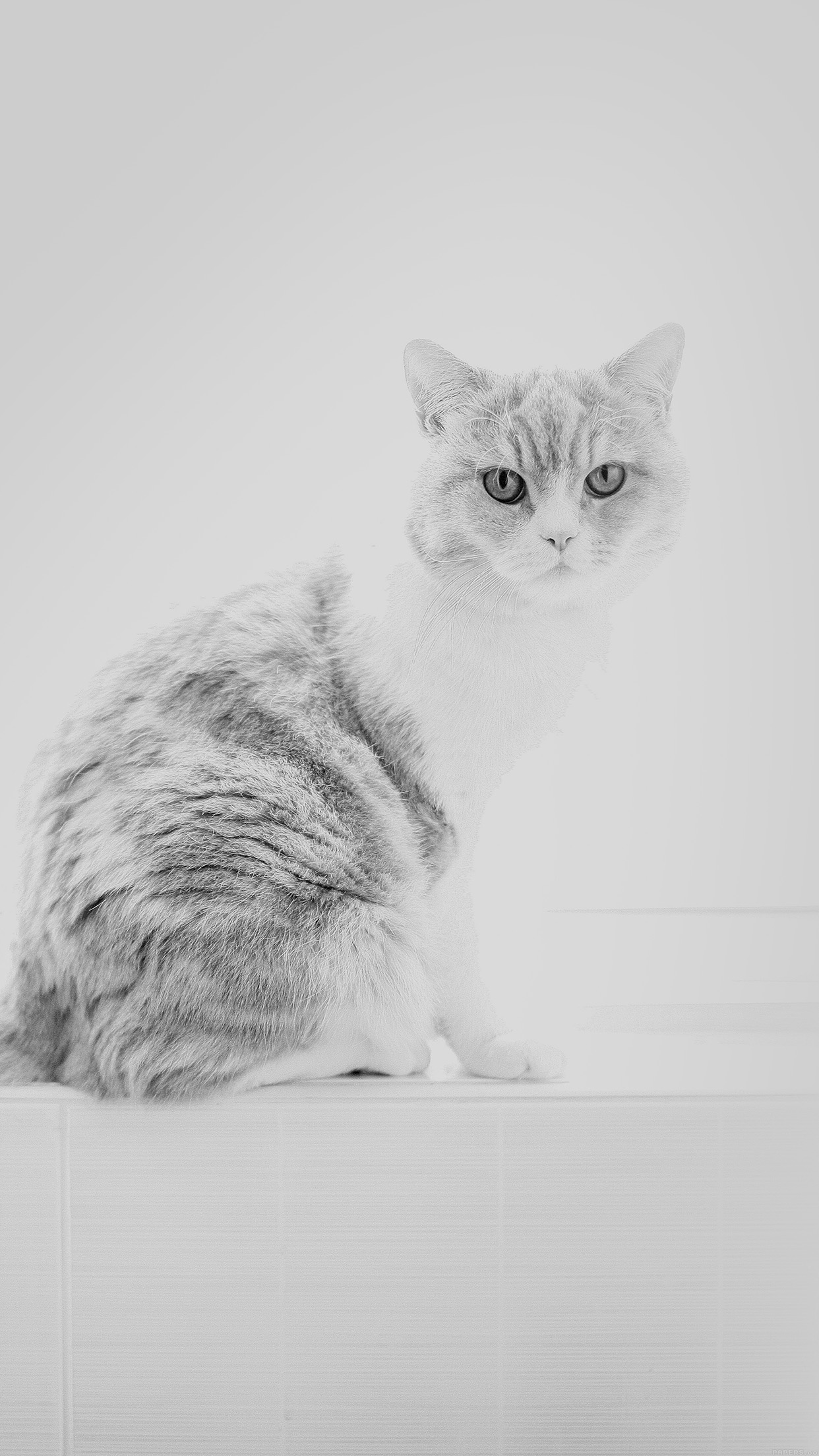 papers.co mj86 cute cat white animal nature 34 iphone6 plus wallpaper