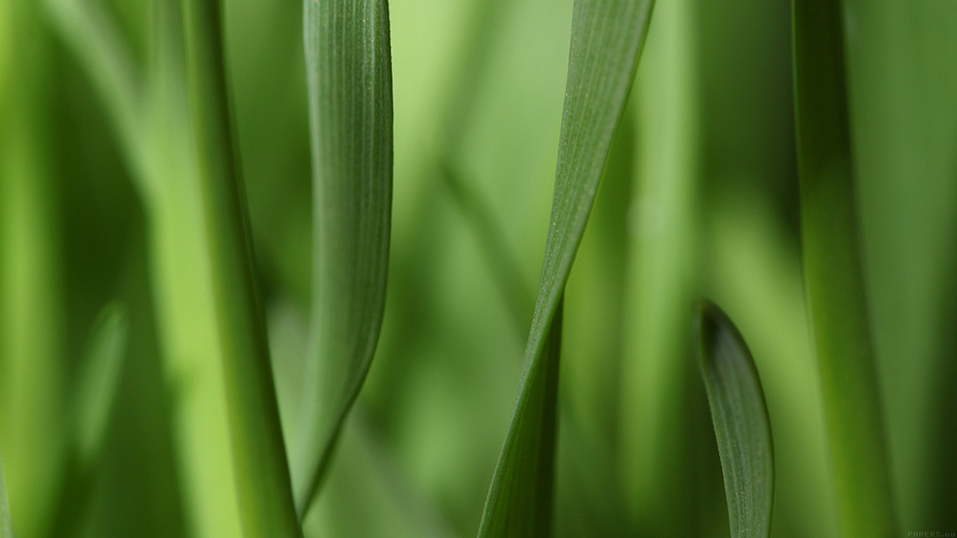 iPapers.co-Apple-iPhone-iPad-Macbook-iMac-wallpaper-mj94-leaf-grass-bokeh-nature-wallpaper