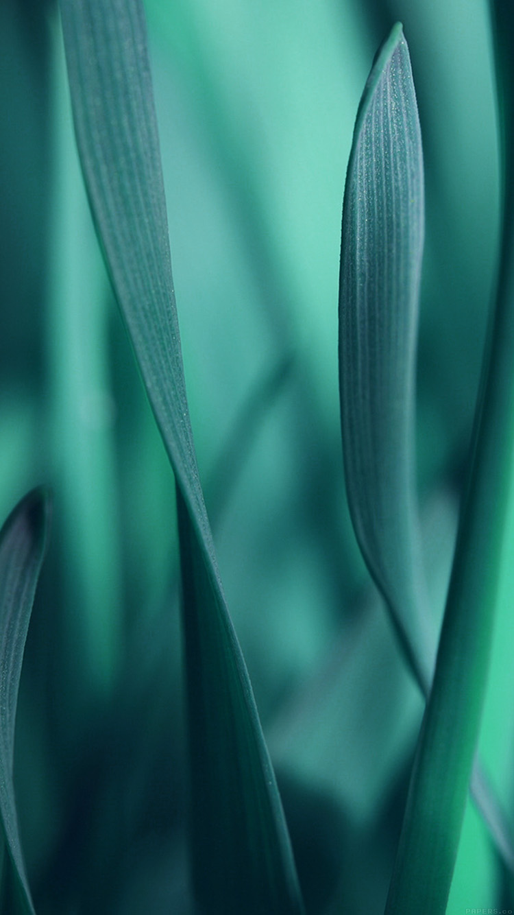Papers.co-iPhone5-iphone6-plus-wallpaper-mj95-leaf-grass-blue-bokeh-nature