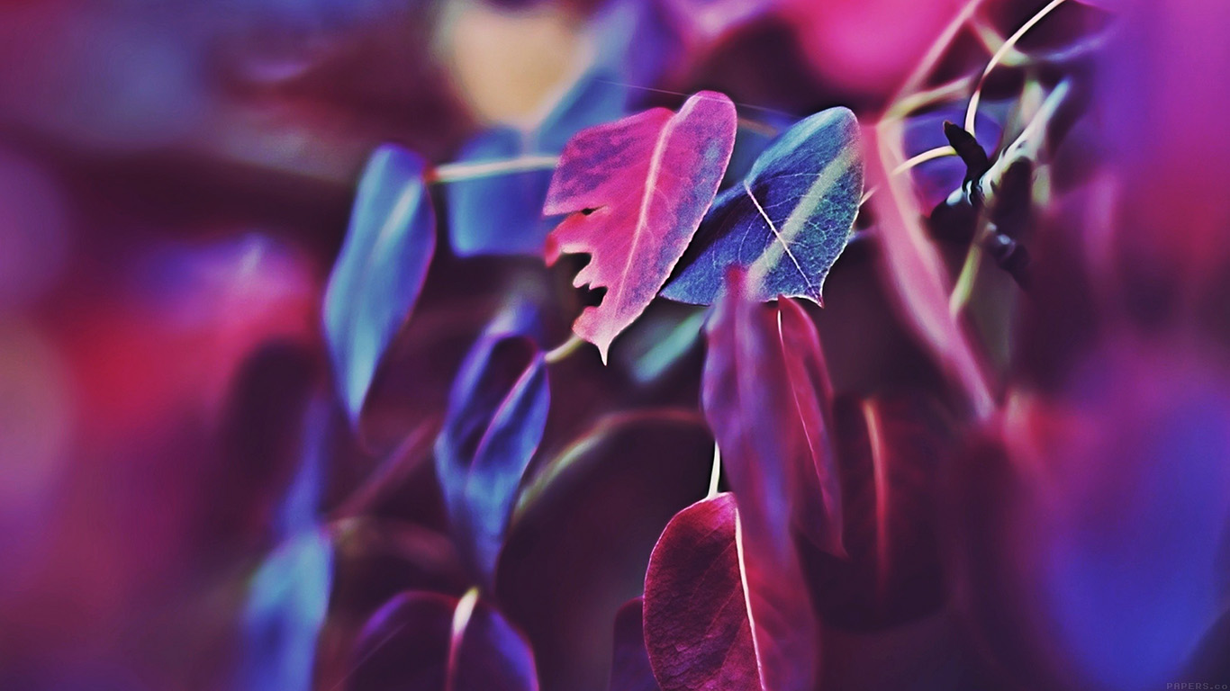 desktop-wallpaper-laptop-mac-macbook-air-mk01-fall-leaf-flower-bokeh-nature-wallpaper
