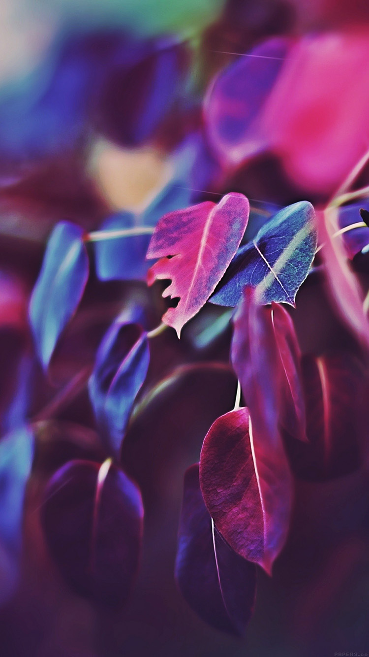 iPhone6papers.co-Apple-iPhone-6-iphone6-plus-wallpaper-mk01-fall-leaf-flower-bokeh-nature