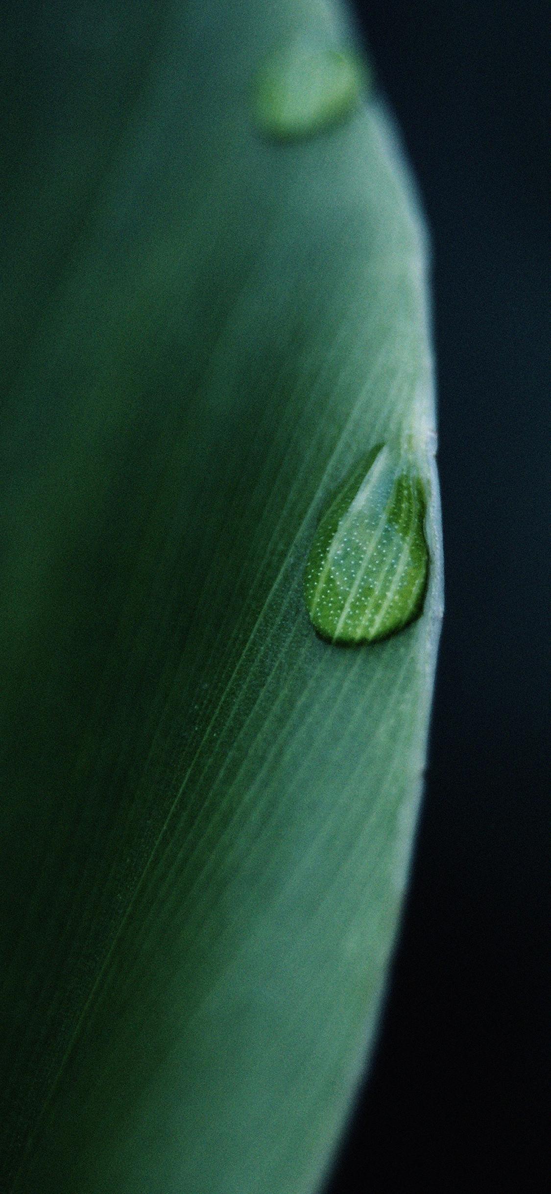 iPhoneXpapers.com-Apple-iPhone-wallpaper-mk06-leaf-raindrop-green-nature