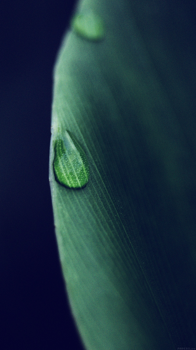 iPhone6papers.co-Apple-iPhone-6-iphone6-plus-wallpaper-mk07-leaf-raindrop-blue-nature