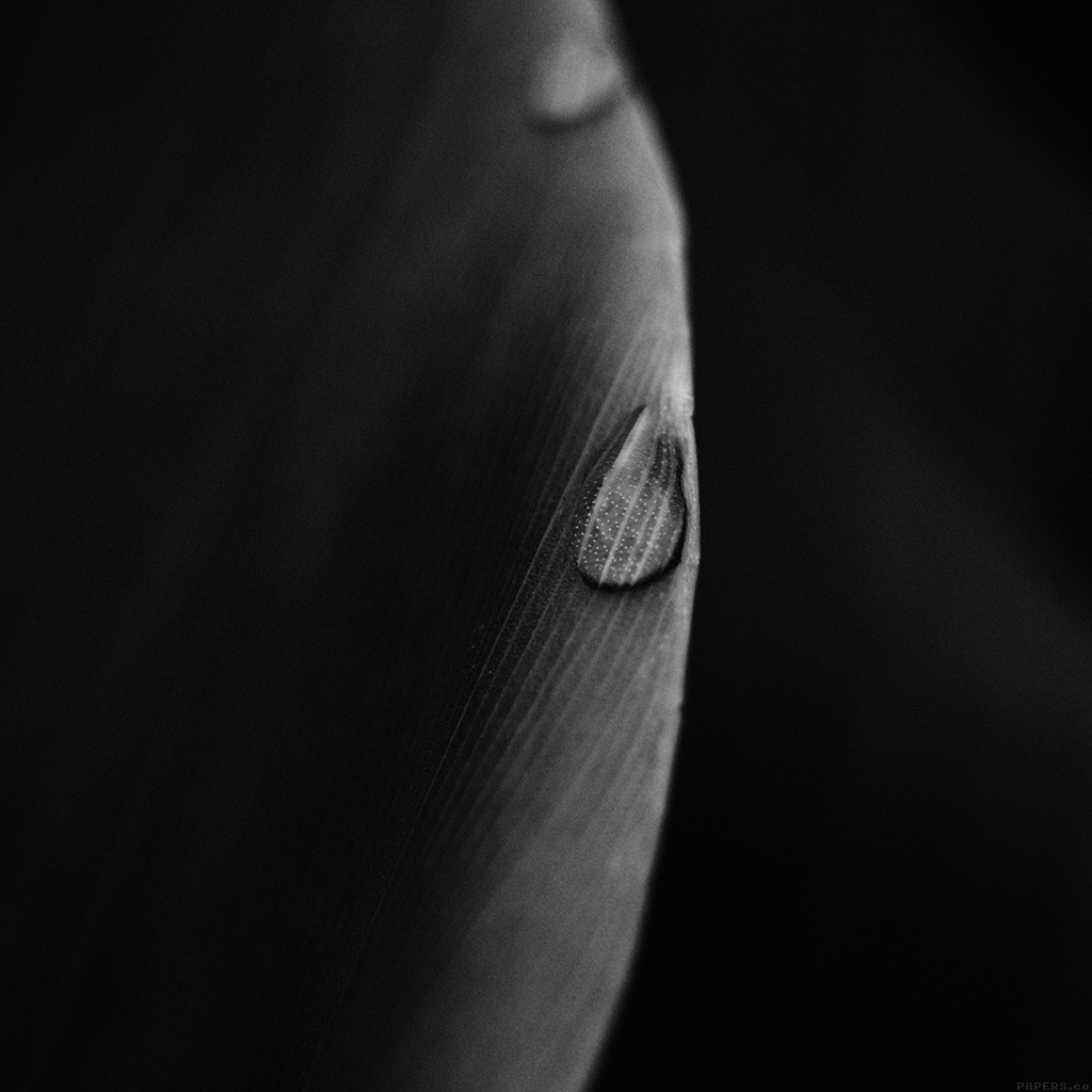 wallpaper-mk08-leaf-raindrop-dark-nature-wallpaper