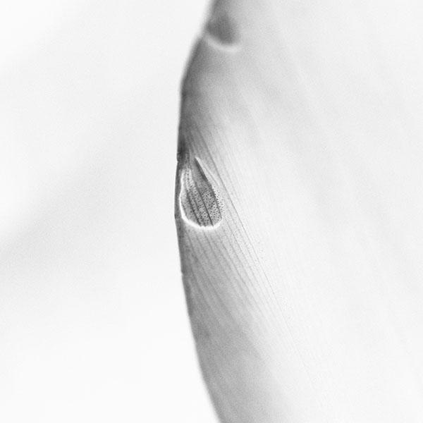 iPapers.co-Apple-iPhone-iPad-Macbook-iMac-wallpaper-mk09-leaf-raindrop-white-nature-wallpaper