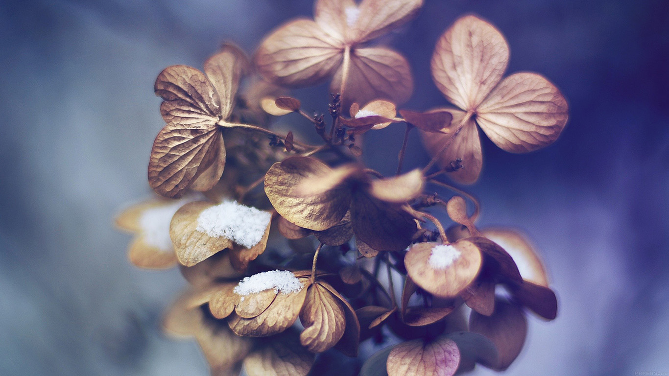 iPapers.co-Apple-iPhone-iPad-Macbook-iMac-wallpaper-mk10-snow-flower-winter-bokeh-nature-wallpaper