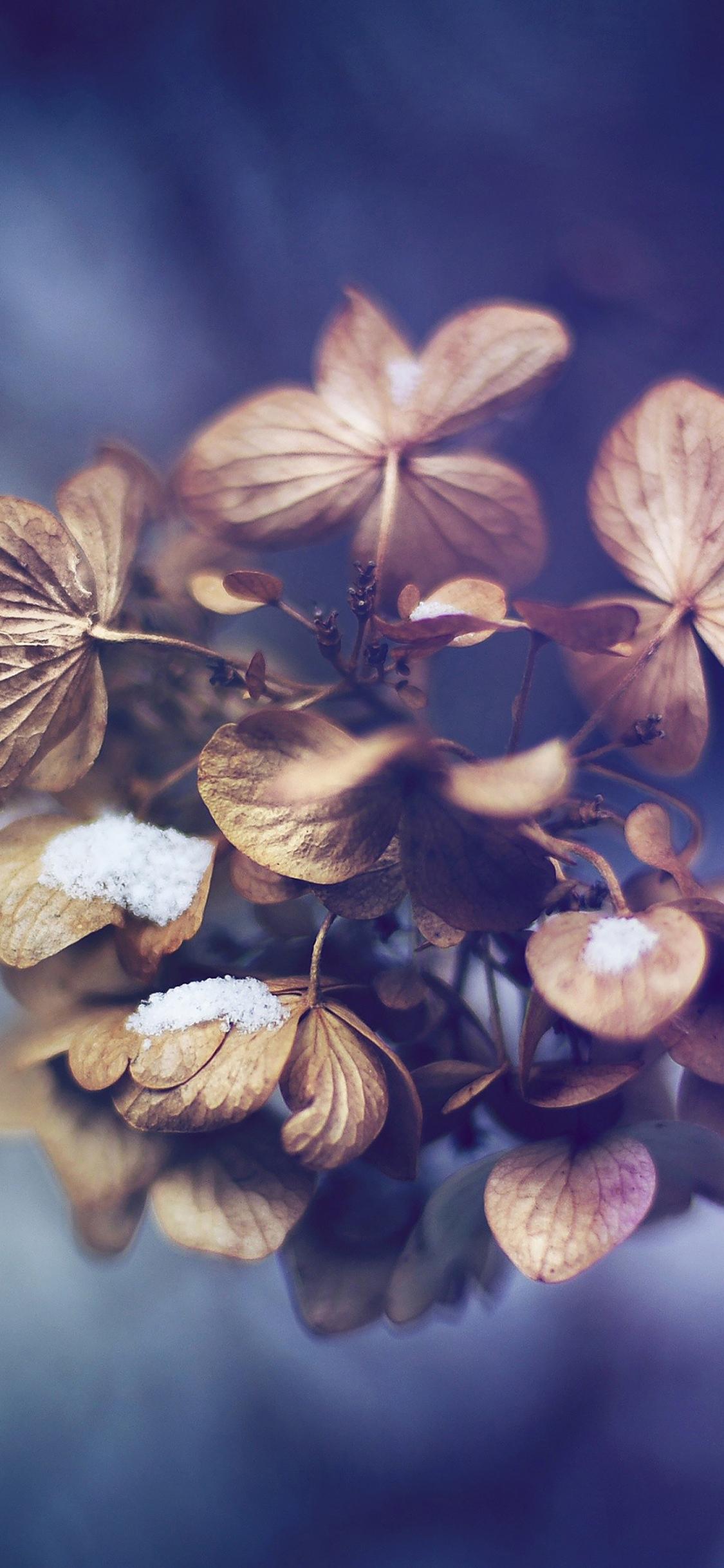 iPhoneXpapers.com-Apple-iPhone-wallpaper-mk10-snow-flower-winter-bokeh-nature