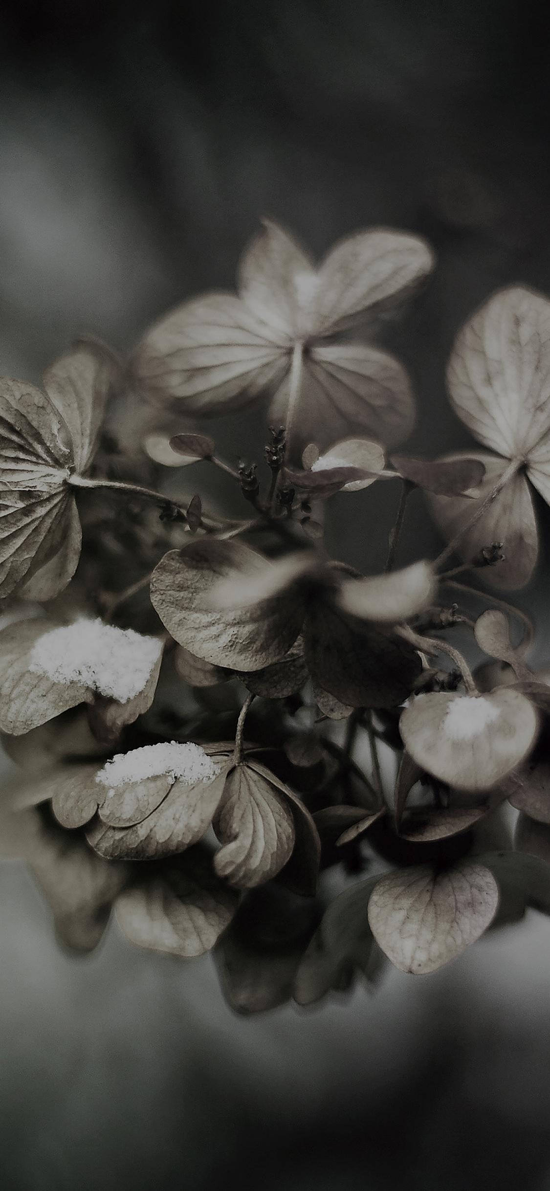 iPhoneXpapers.com-Apple-iPhone-wallpaper-mk12-snow-flower-winter-bokeh-dark-nature