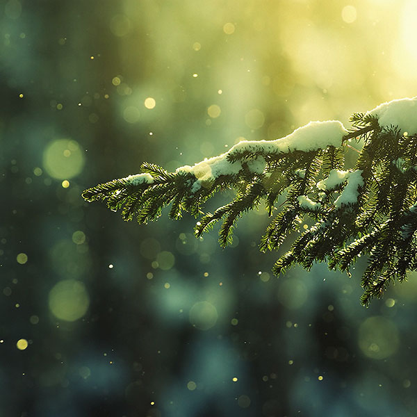 iPapers.co-Apple-iPhone-iPad-Macbook-iMac-wallpaper-mk27-snowing-tree-winter-nature-mountain-wallpaper