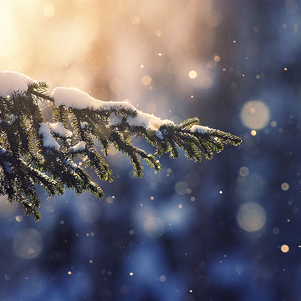 iPapers.co-Apple-iPhone-iPad-Macbook-iMac-wallpaper-mk28-snowing-tree-blue-christmas-winter-nature-mountain-wallpaper