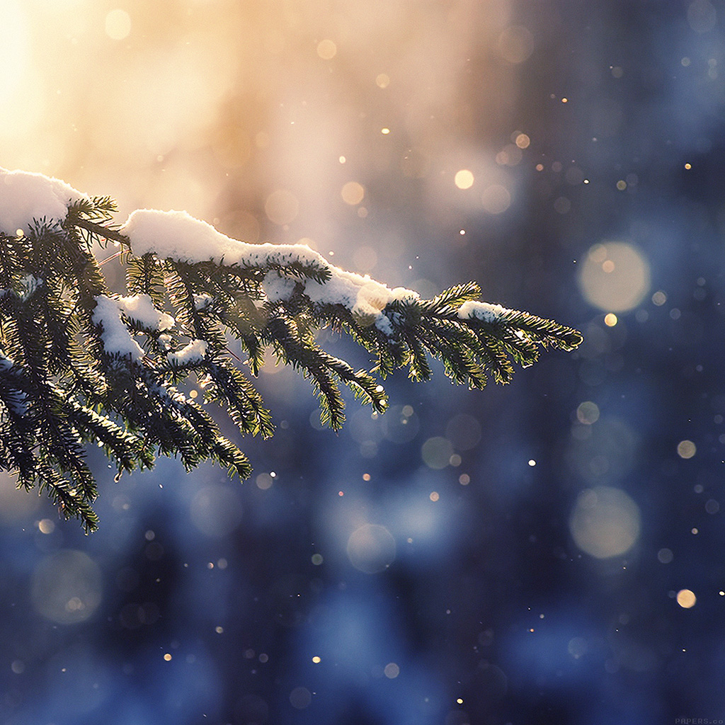 wallpaper-mk28-snowing-tree-blue-christmas-winter-nature-mountain-wallpaper
