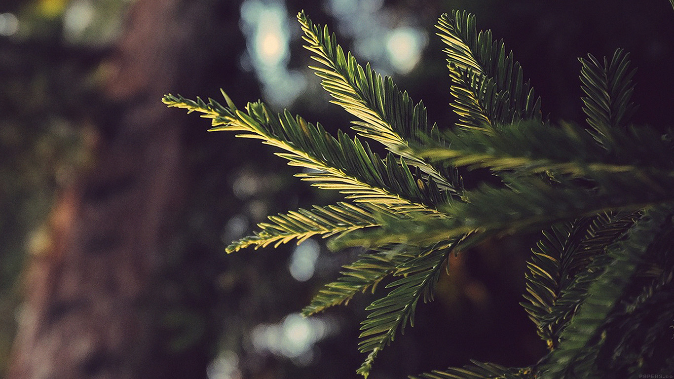 iPapers.co-Apple-iPhone-iPad-Macbook-iMac-wallpaper-mk43-tree-winter-light-bokeh-life-mountain-nature-wallpaper