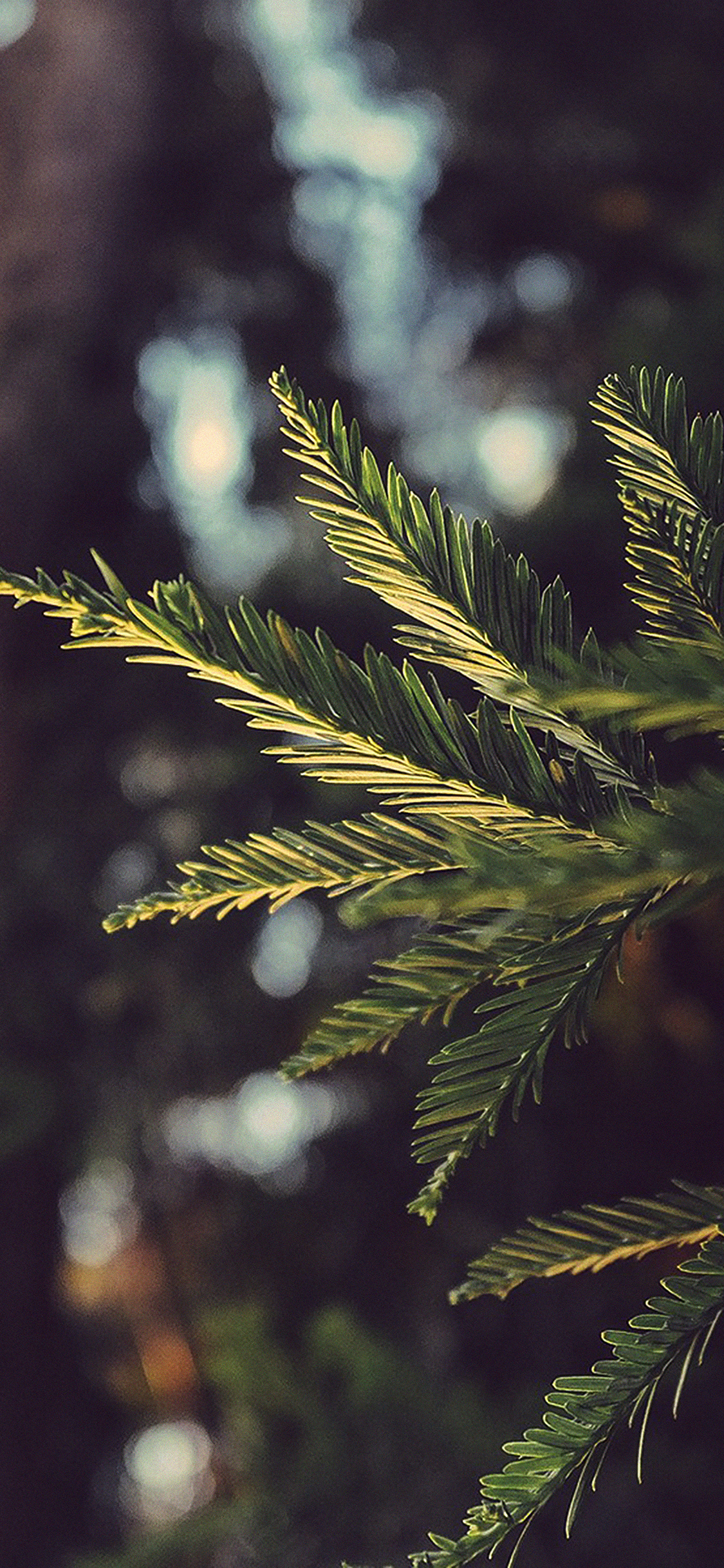 iPhoneXpapers.com-Apple-iPhone-wallpaper-mk43-tree-winter-light-bokeh-life-mountain-nature