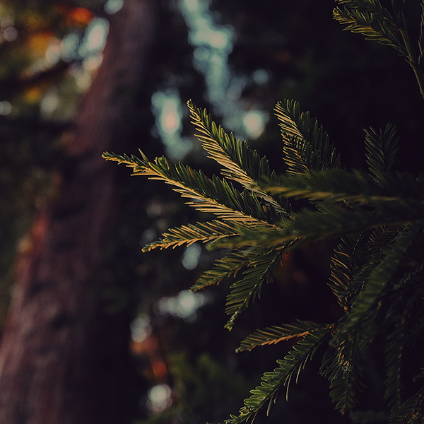 iPapers.co-Apple-iPhone-iPad-Macbook-iMac-wallpaper-mk44-tree-winter-dark-bokeh-life-mountain-nature-wallpaper