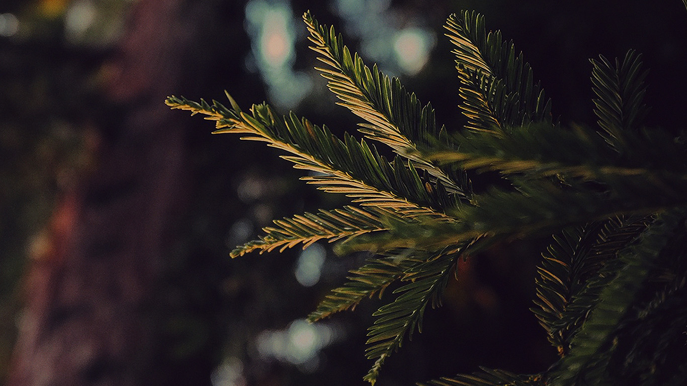desktop-wallpaper-laptop-mac-macbook-air-mk44-tree-winter-dark-bokeh-life-mountain-nature-wallpaper