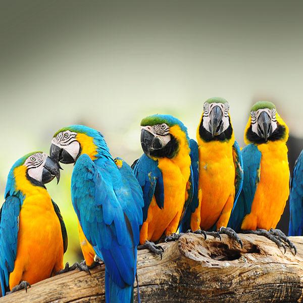 iPapers.co-Apple-iPhone-iPad-Macbook-iMac-wallpaper-mk58-mocking-bird-animal-nature-wallpaper