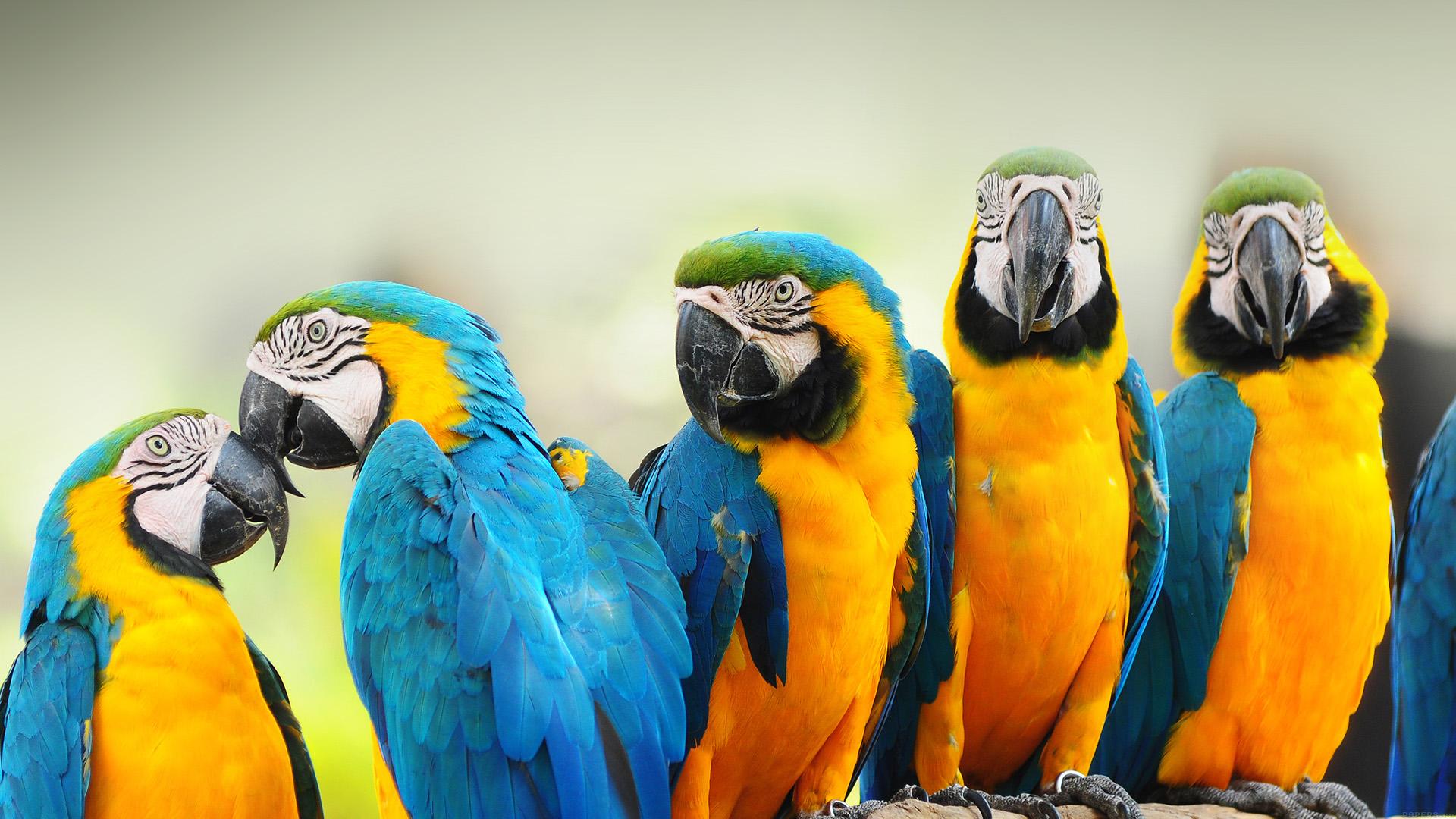 essay about birds and animals Essay on swan bird in hindi language - पक्षी प्रजातियों में से हंस को सबसे श्रेष्ठ.