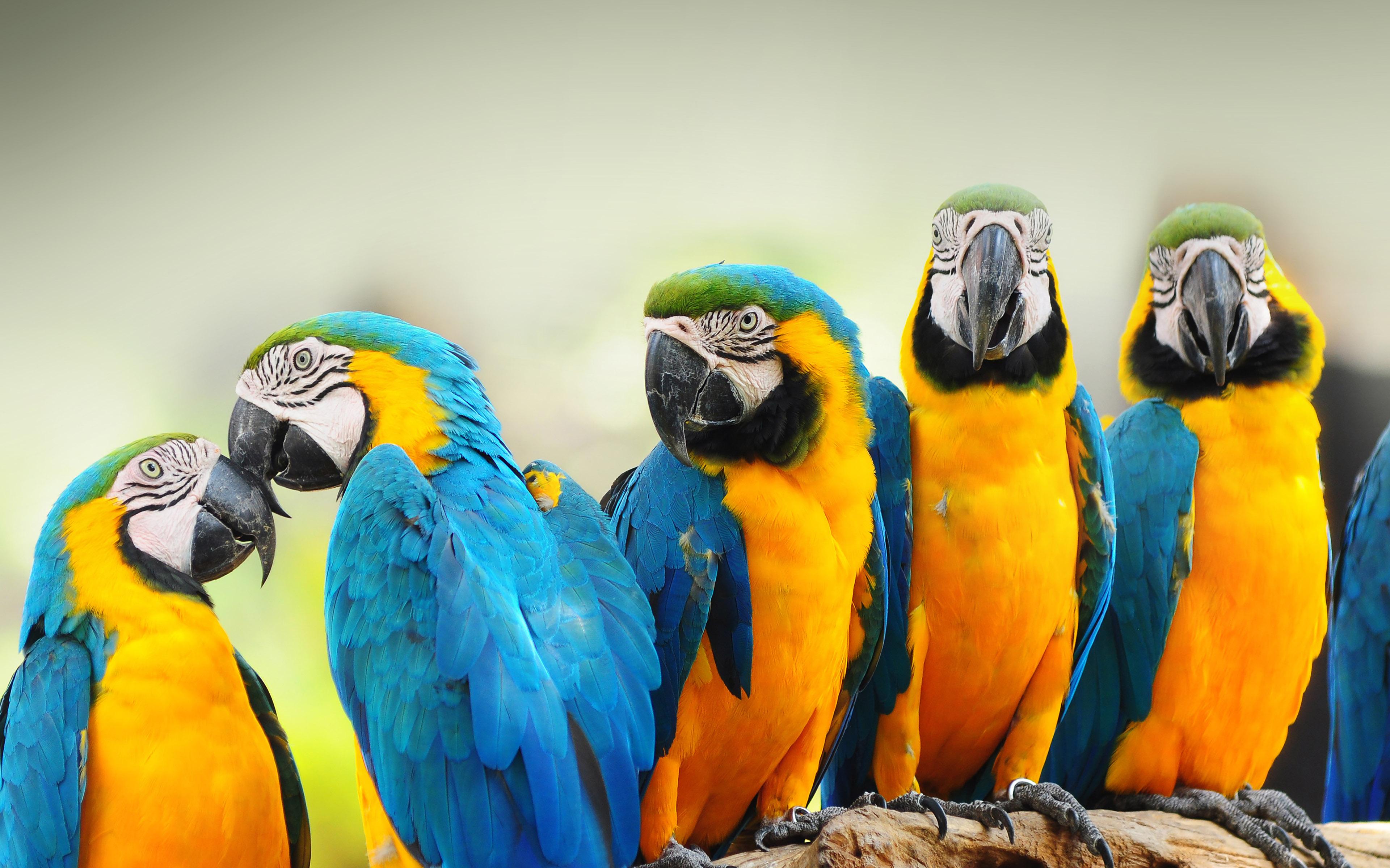 Mk58 Mocking Bird Animal Nature Papers Co