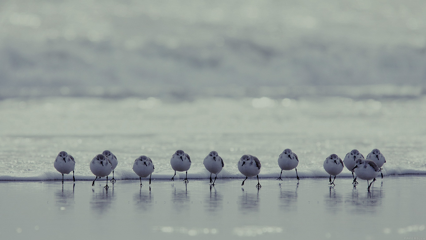 desktop-wallpaper-laptop-mac-macbook-air-mk60-birds-beach-wave-ocean-blue-water-sea-nature-animal-wallpaper