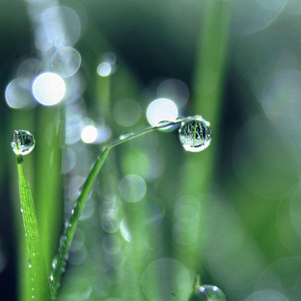 iPapers.co-Apple-iPhone-iPad-Macbook-iMac-wallpaper-mk61-bokeh-leaf-raindrop-nature-pure-wallpaper