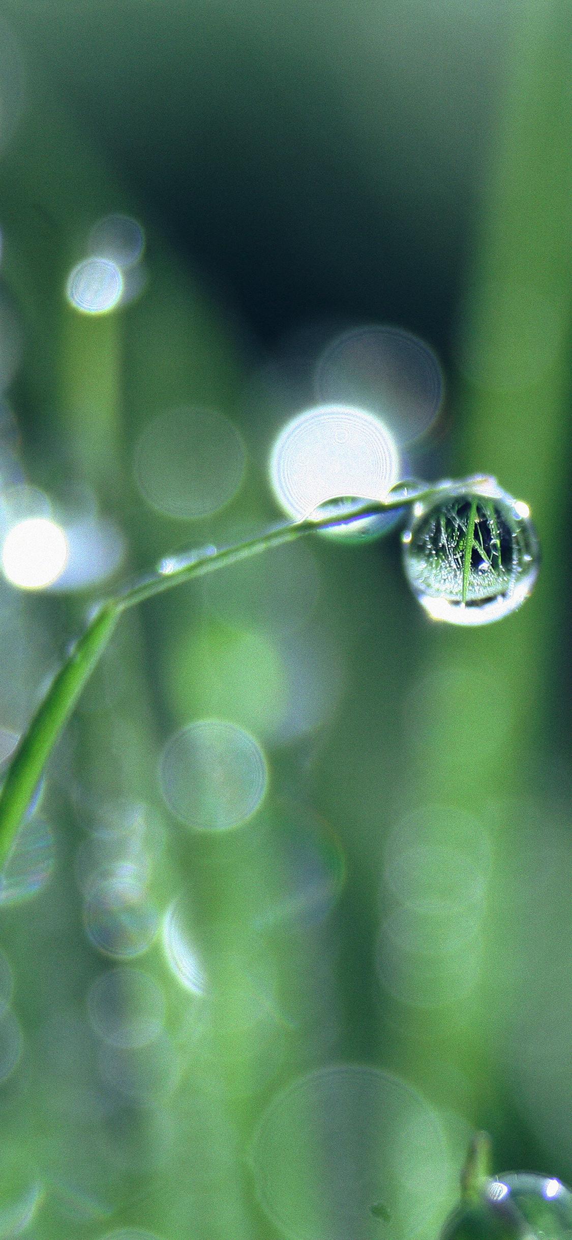iPhoneXpapers.com-Apple-iPhone-wallpaper-mk61-bokeh-leaf-raindrop-nature-pure