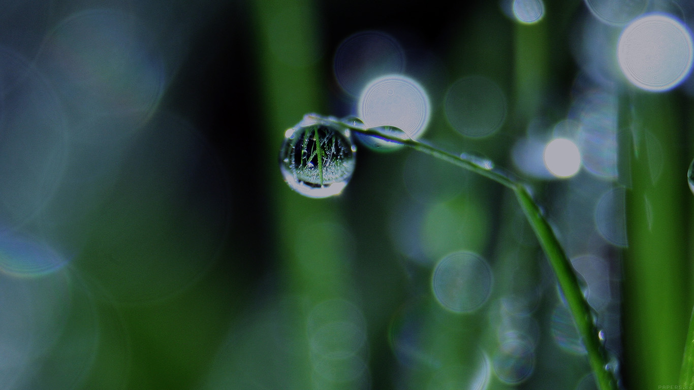 desktop-wallpaper-laptop-mac-macbook-air-mk62-bokeh-leaf-raindrop-dark-nature-pure-wallpaper
