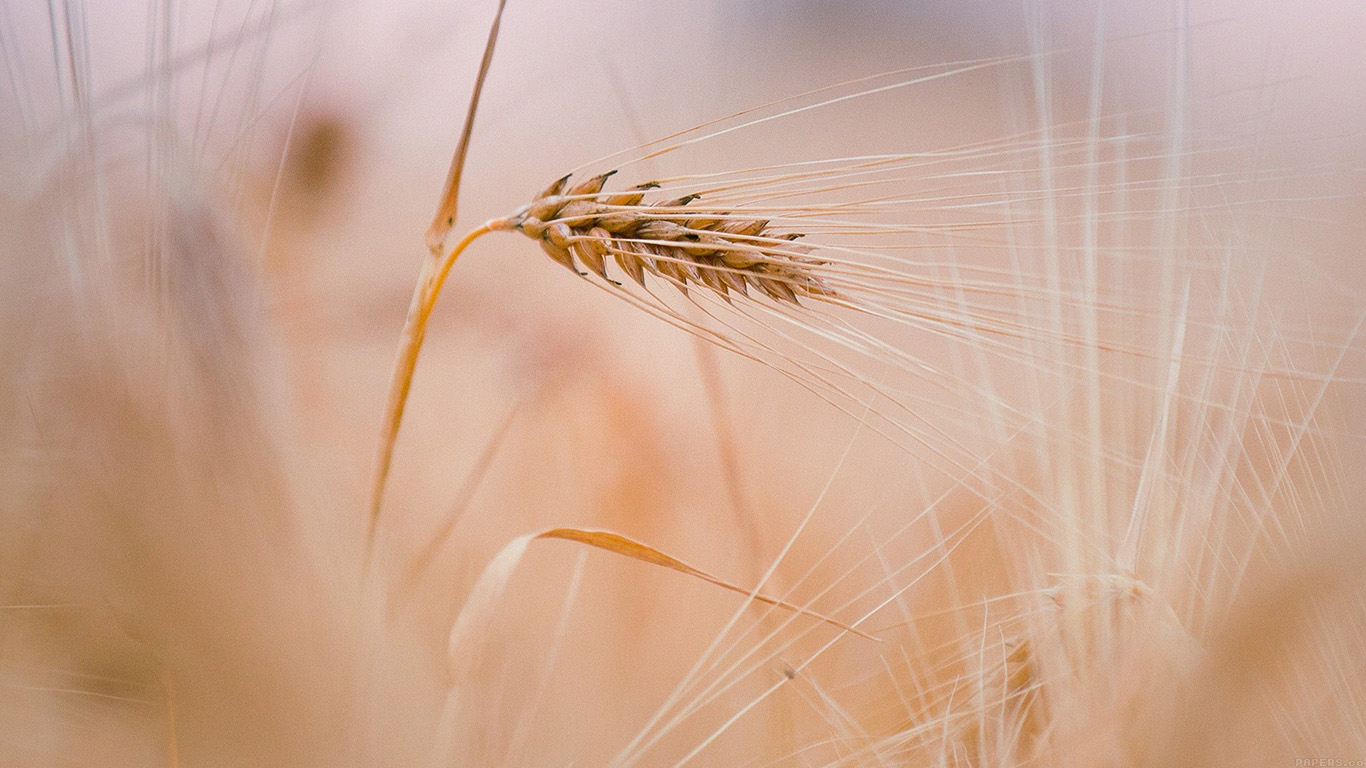iPapers.co-Apple-iPhone-iPad-Macbook-iMac-wallpaper-mk63-rice-leaf-nature-bokeh-blur-wallpaper